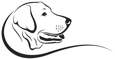 labrador-zauberwald